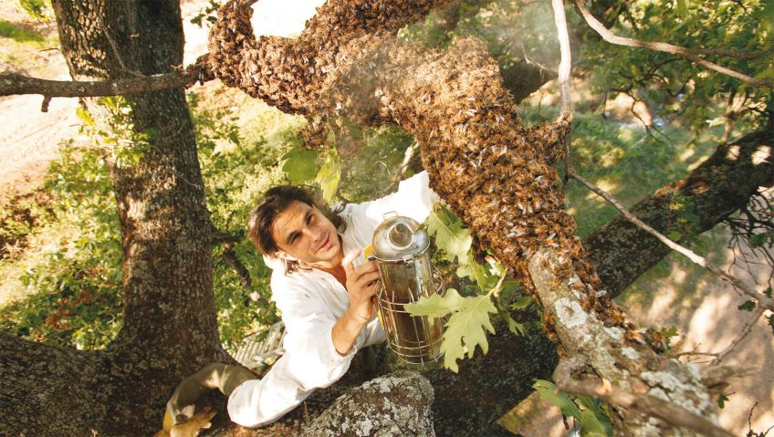 essaim abeille arbre ruche apiculteur