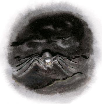 dessin nuit Araignée
