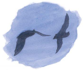 dessin nuit Chauves-souris vol