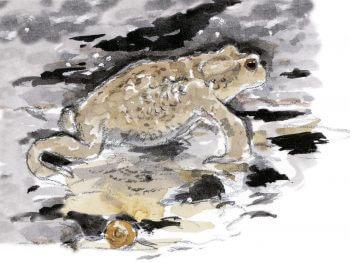 Crapaud et escargot dessin nuit