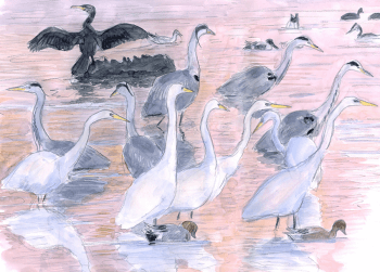 dessin-chevallier-herons