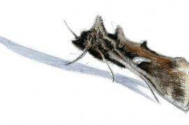 Open air papillons, l\'écran enchanté - La Salamandre