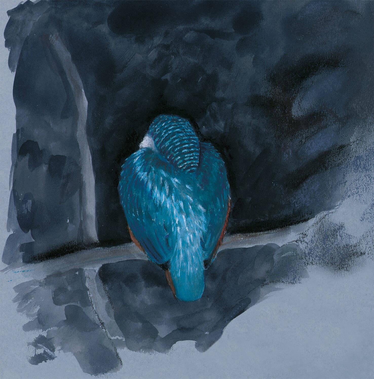 dessin nuit martin-pêcheur bleu