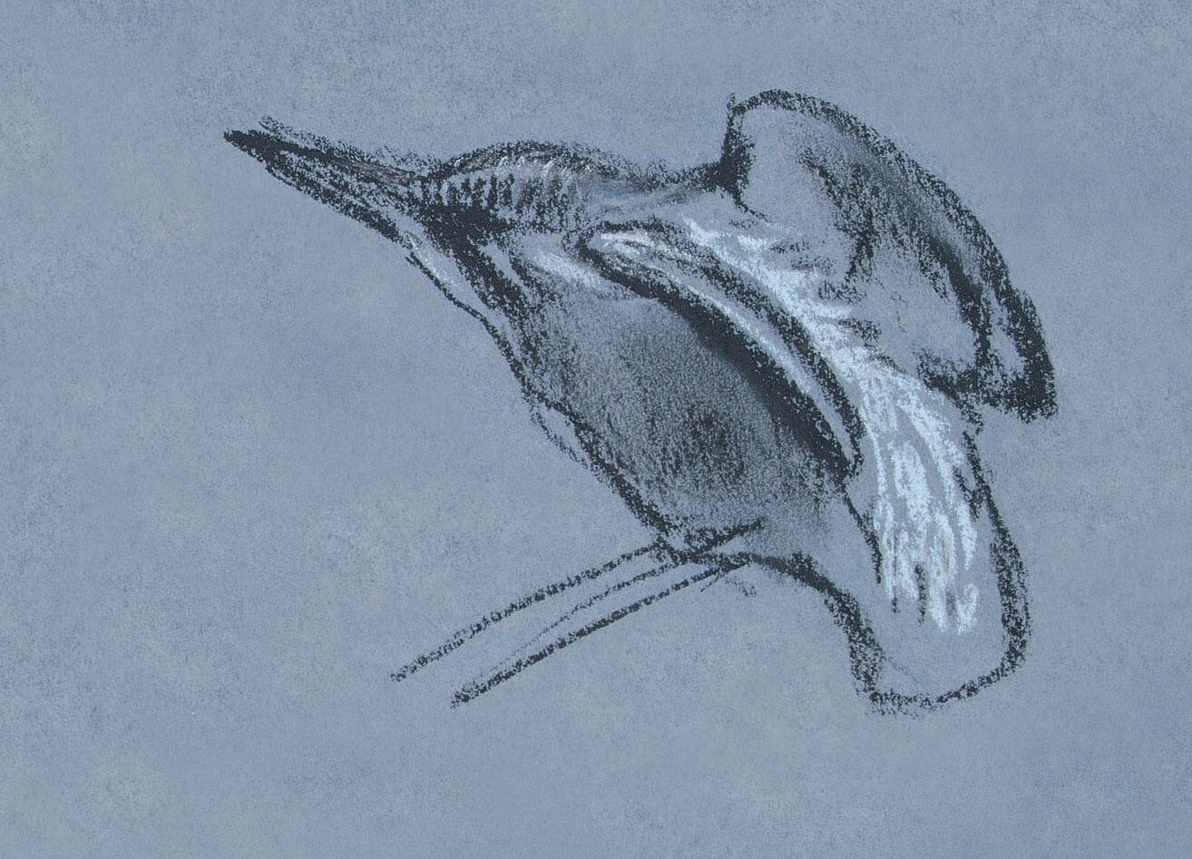 dessin nuit martin-pêcheur