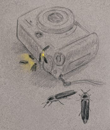 dessin nuit vers luisants appareil photo