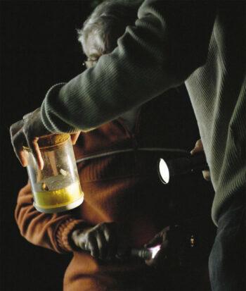 observation papillon de nuit capture lampe de poche