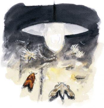 dessin nuit Papillons de nuit sous un réverbère