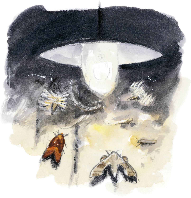 Dix règles d'or pour observer les animaux la nuit Papillons de nuit sous un réverbère