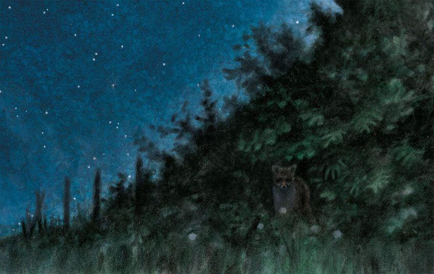 dessin nuit renard