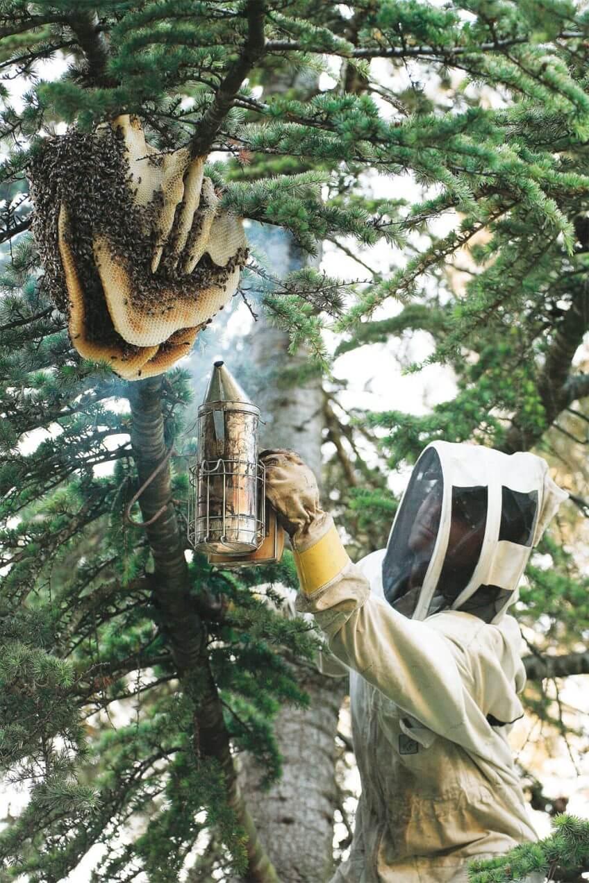 Un apiculteur en action arbre abeille ruche essaim