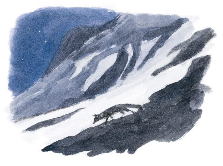 dessin nuit renard neige