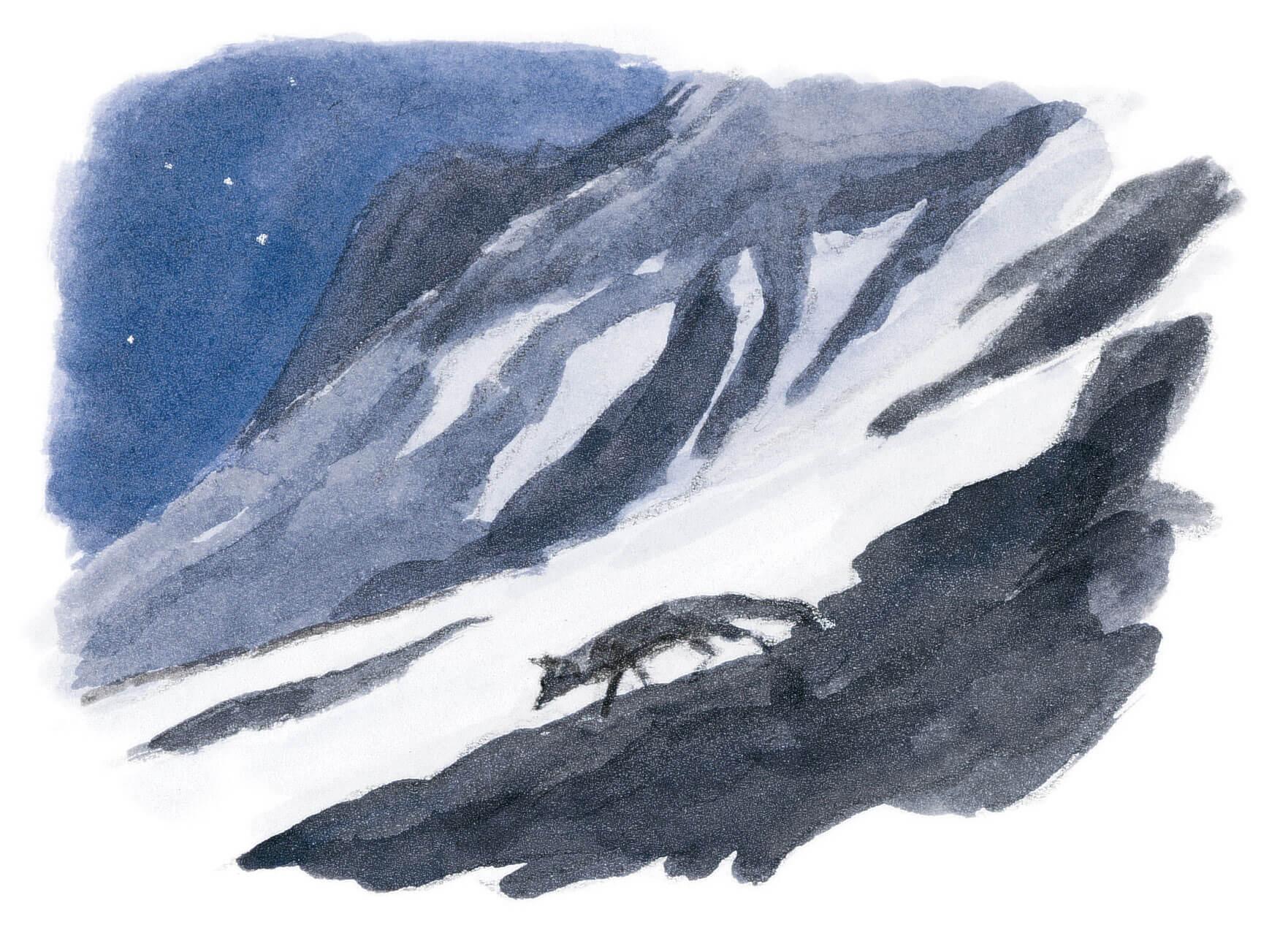 Dix règles d'or pour observer les animaux la nuit renard