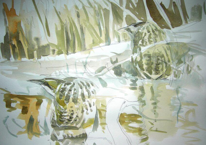 Hérons butors par Nick Derry - La Salamandre