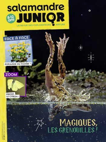 Couverture de La Salamandre Junior n°110