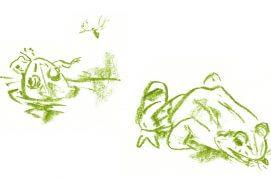 C'est l'heure du repas pour la grenouille verte. / © Jean Chevallier