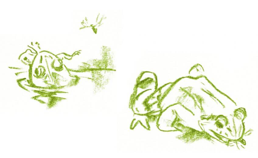 Casse-tête chez les grenouilles vertes - La Salamandre dessin repas pour la grenouille verte mouche