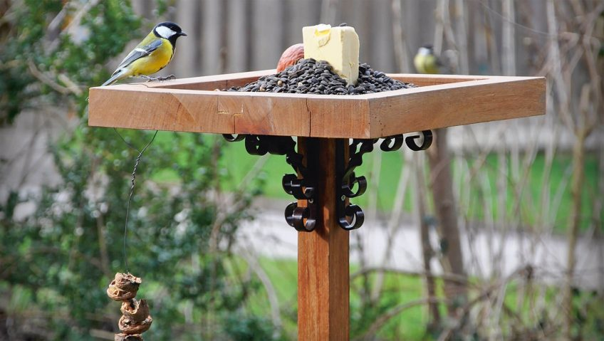 Comment nourrir merles et mésanges? - La Salamandre oiseaux sur la mangeoire beurre graine mésange