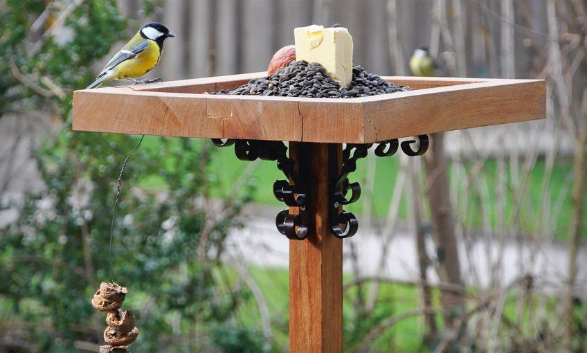 Comment nourrir correctement les oiseaux en hiver ?