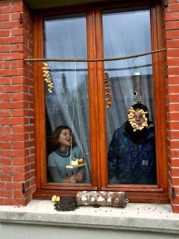 Comment nourrir merles et mésanges? - La Salamandre nourrissage oiseau bricolage enfants fenêtre observation