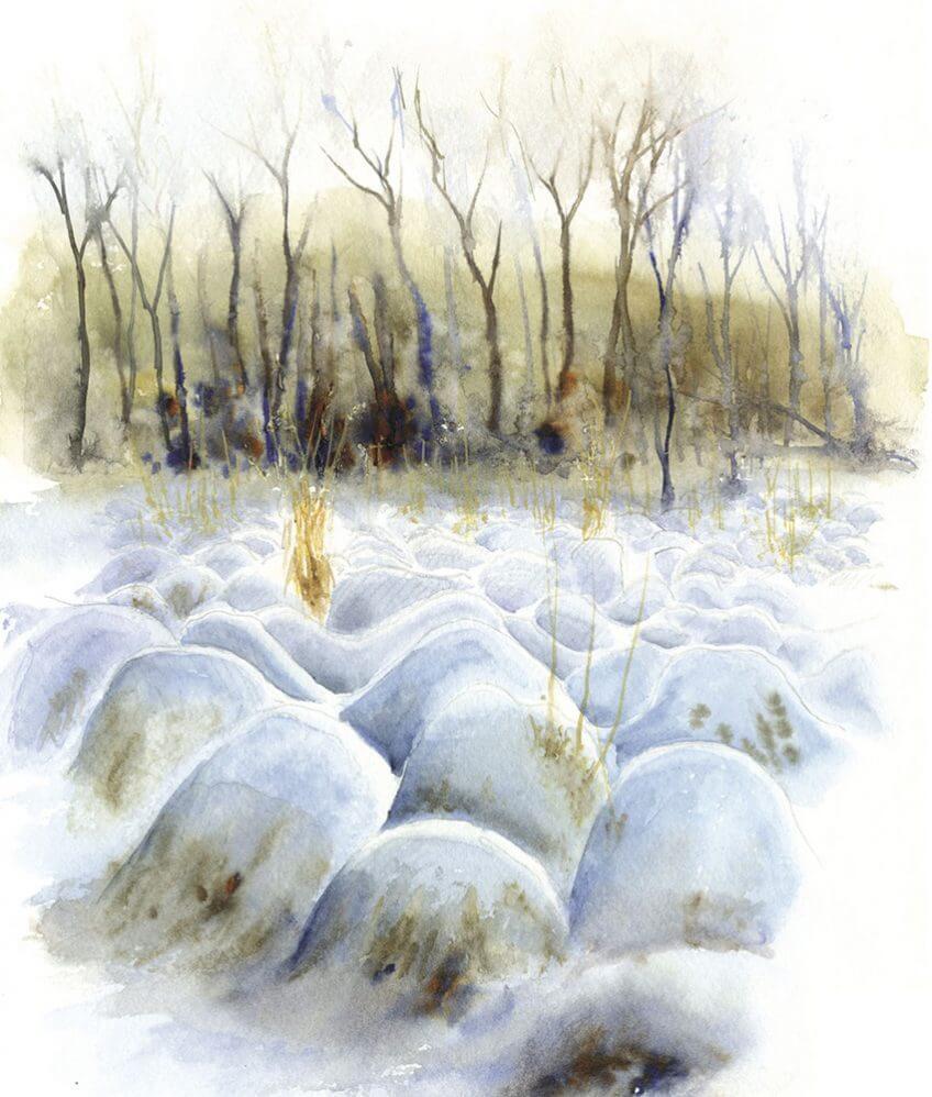 Les fagnes en Belgique par le peintre Yves Fagniart