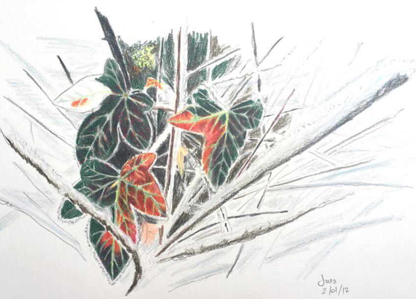 Le zèle du lierre Jean-Philippe Paul - La Salamandre