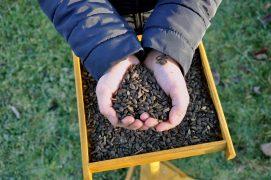 Disposez des graines de tournesol sur un plateau mais aussi au sol. / © David Melbeck