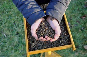 Comment nourrir merles et mésanges? - La Salamandre graines de tournesol sur un plateau nourrissage