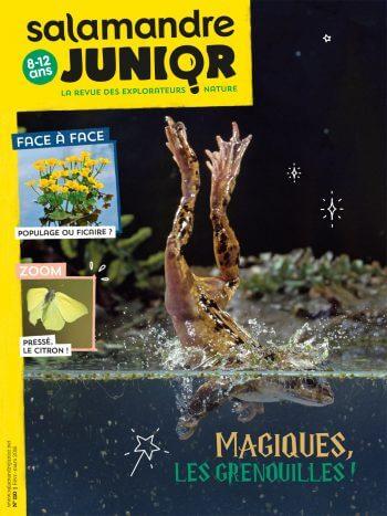 Ils se mouillent pour les grenouilles - La Salamandre salamandre junior grenouille