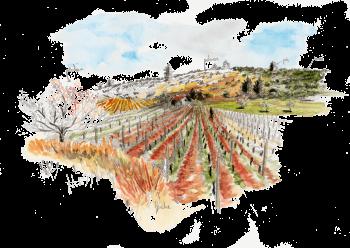 La vigne est un arbrisseau à sarments cultivé depuis des temps immémoriaux en Europe, dans le Caucase et en Afrique du Nord.