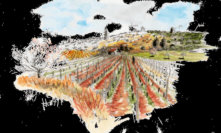 Bruants zizis et fous dans les vignes - La Salamandre vigne dessin