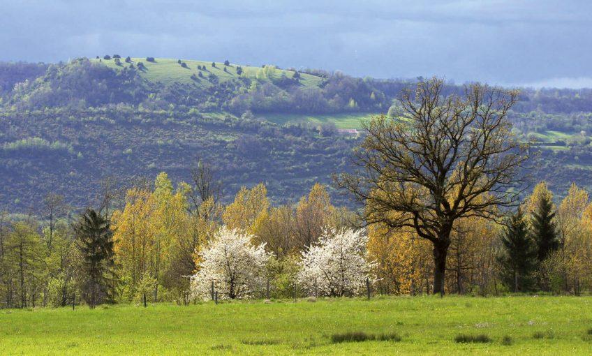 """Natura 2000, le plus grand réseau de sites protégés est sauvé - La Salamandre site """"Natura 2000"""" Petite Montagne du Jura campagne pré arbre"""