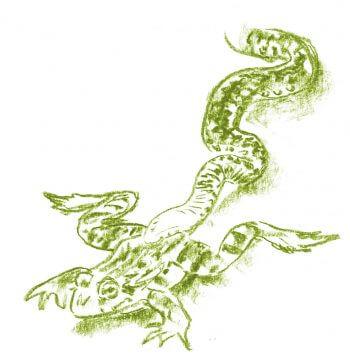 Casse-tête chez les grenouilles vertes - La Salamandre dessin serpent manger prédation grenouille