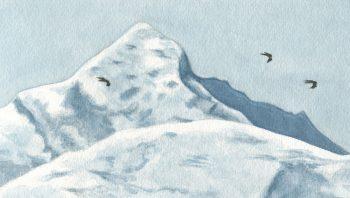 Milans noirs traversant les Alpes