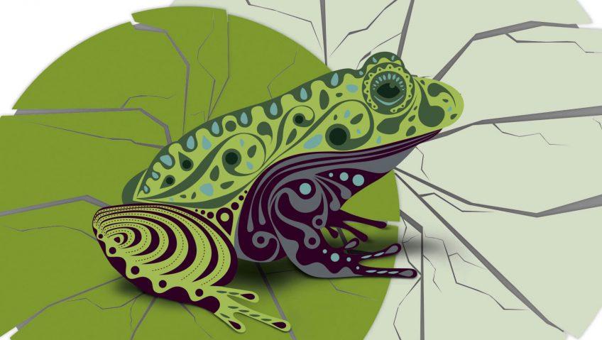 Les causes du déclin des amphibiens - La Salamandre grenouille dessin menace