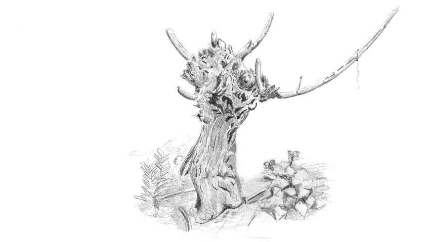 3 conseils pour apprécier la vigne - La Salamandre dessin vigne ceps