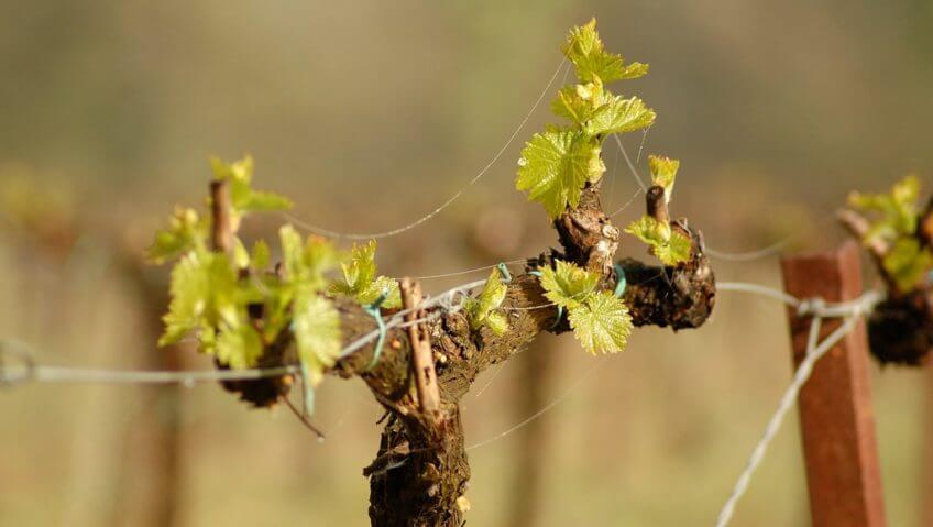 3 conseils pour apprécier la vigne - La Salamandre Vigne