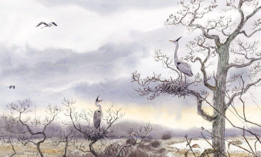 héron malgré lui dessin arbre nid