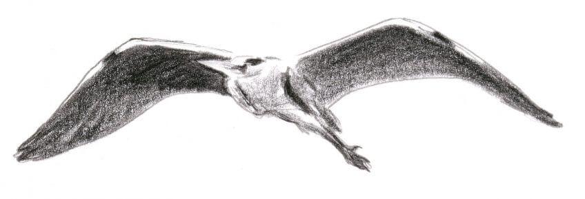 héron malgré lui dessin vol
