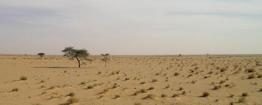 milan noir milou opération migration mauritanie désert