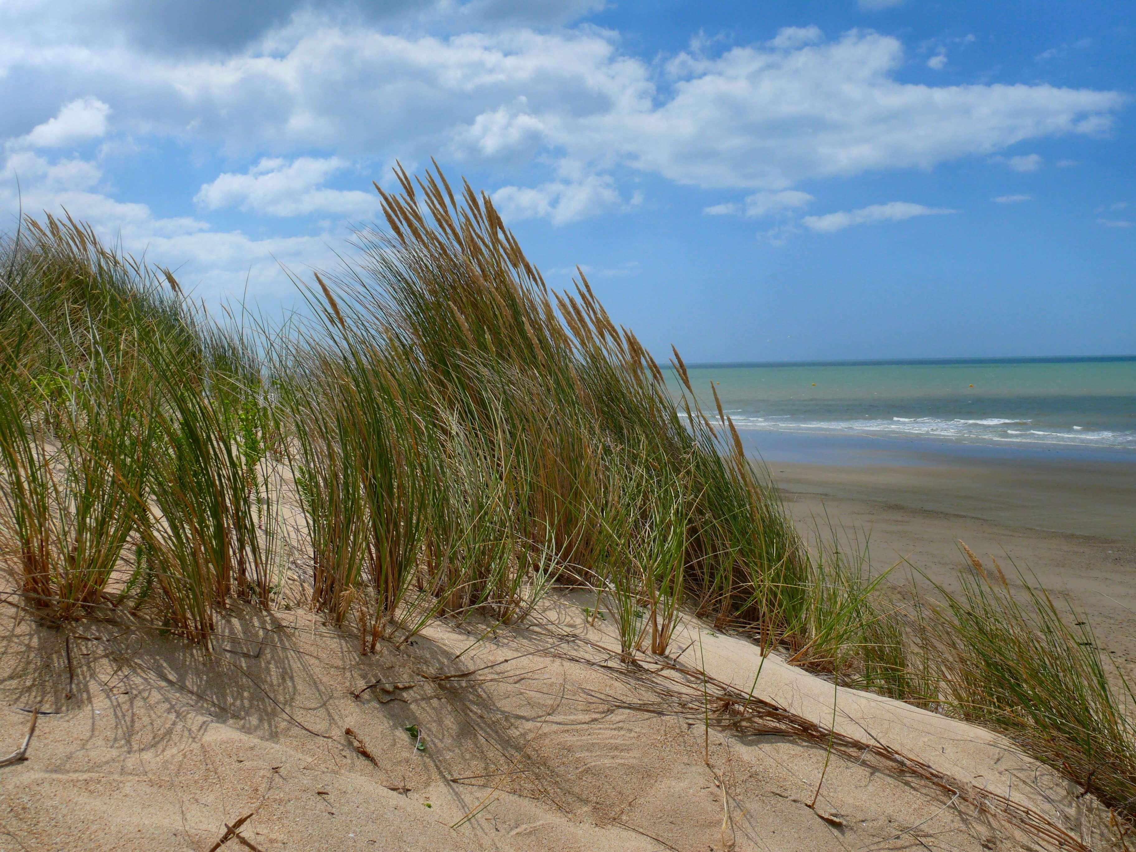 dune sable sapin