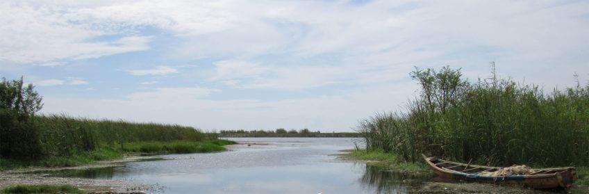 milou milan noir en vol avec salamandre fleuve sénégal migration