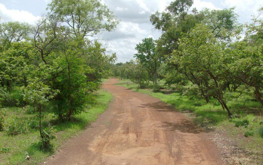 kundera mystérieux milan noir opération milan forêt Niokolo Koba National Park Senegal