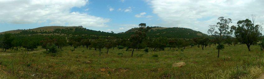 milou migration vol milan noir maroc arbre paysage