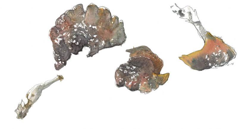 Balade de novembre, et les busards ? - La Salamandre dessin champignon