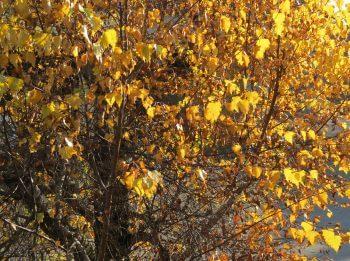 Balade de novembre, et les busards ? - La Salamandre arbre feuille