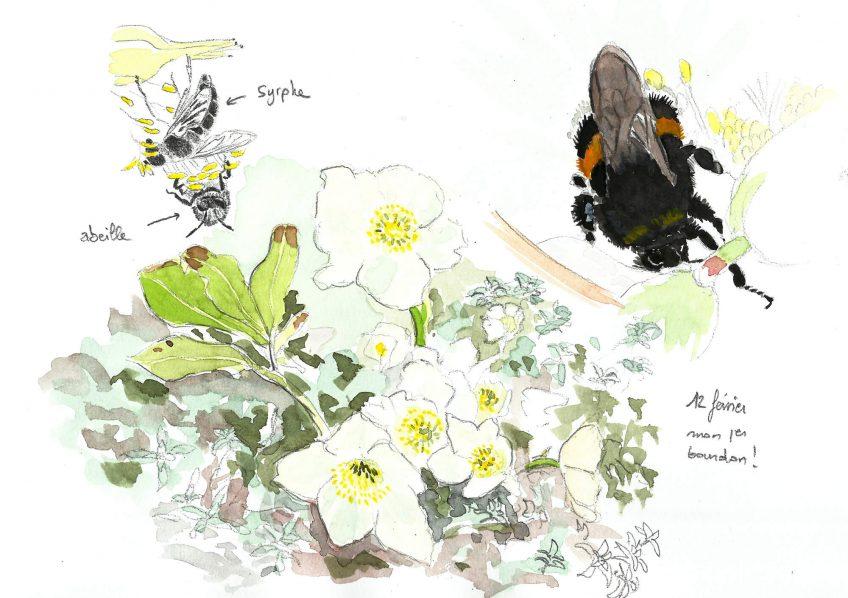 Une rose pour la reine bourdon - La Salamandre