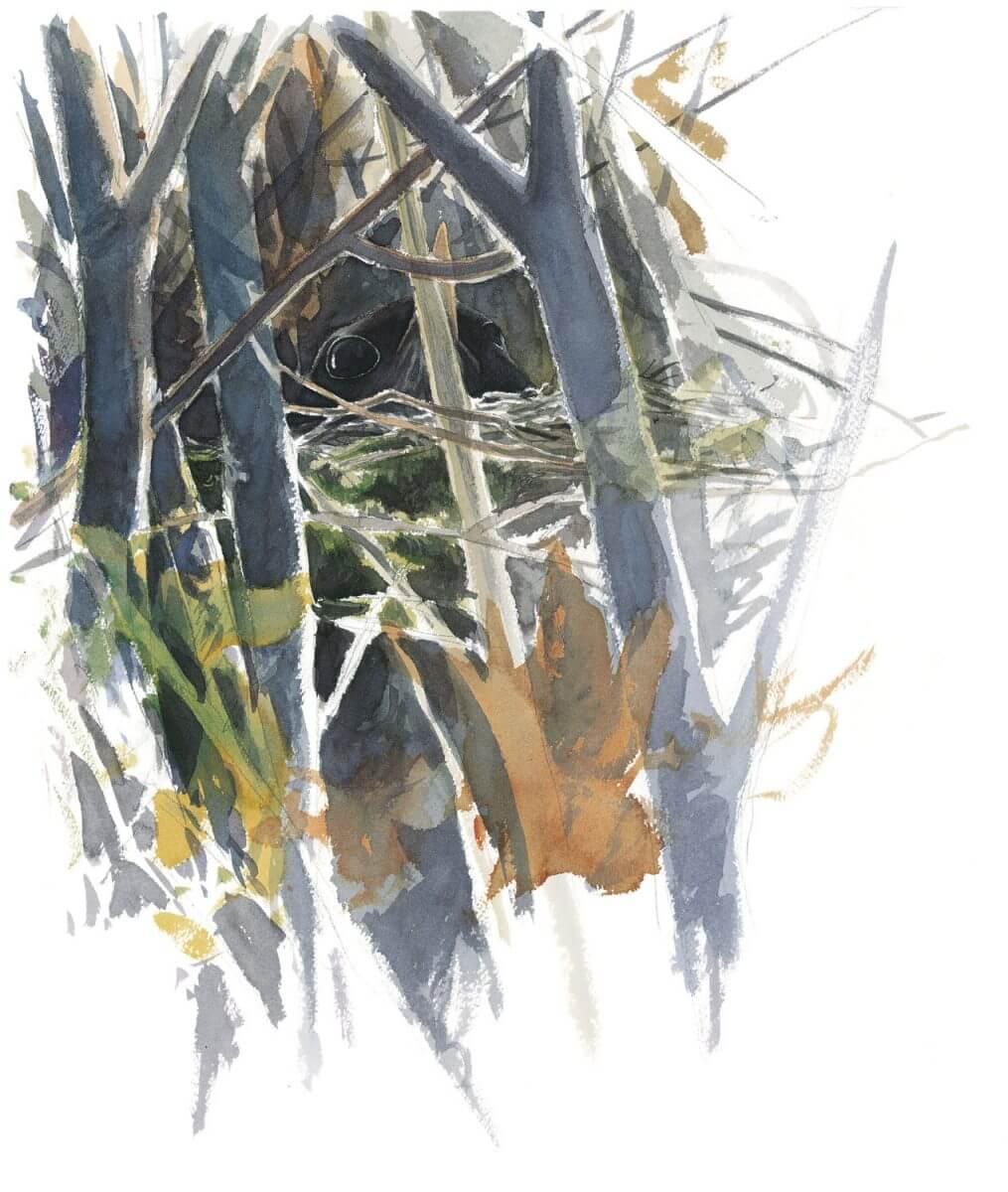 Balade D Avril Avec Les Feuilles Et Les Fleurs La Salamandre