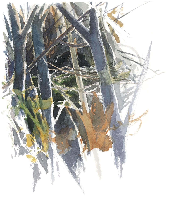 Balade d'avril avec les feuilles et les fleurs - La Salamandre dessin merle nid
