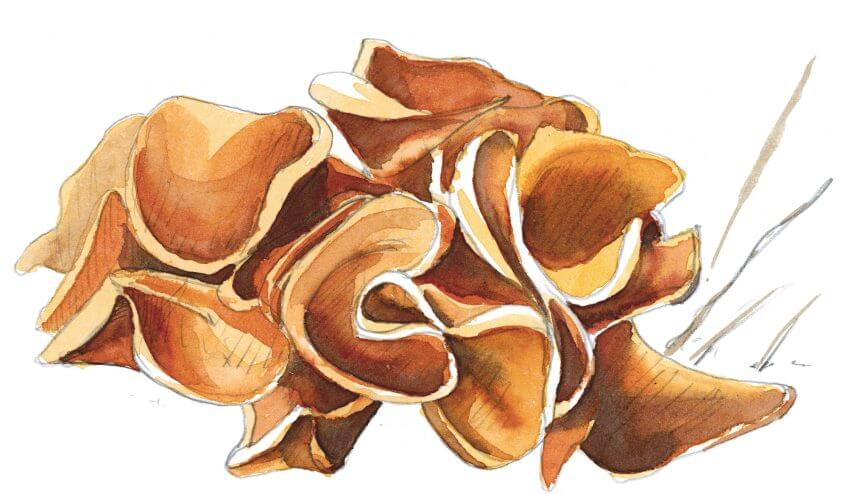 Balade d'octobre avec mille épices - La Salamandre dessin champignon