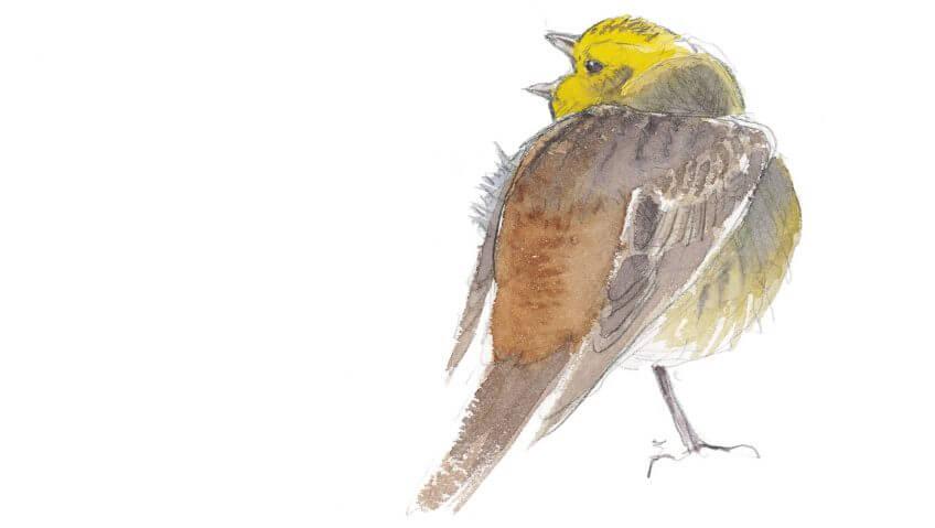 Balade de février, ambiance oiseaux - La Salamandre